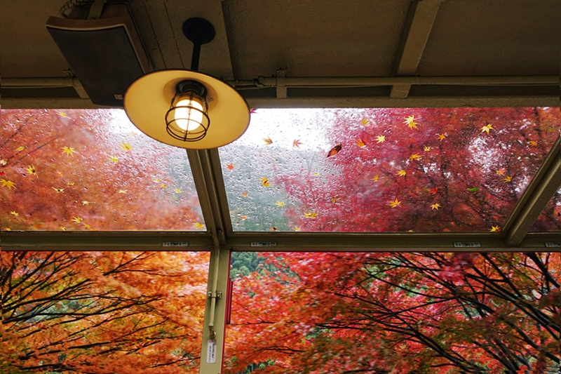 5 Tips to Improve Your Indoor Air Quality This Fall