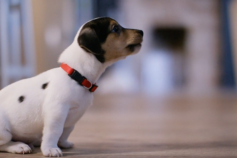 video-does indoor air quality affect my pet?